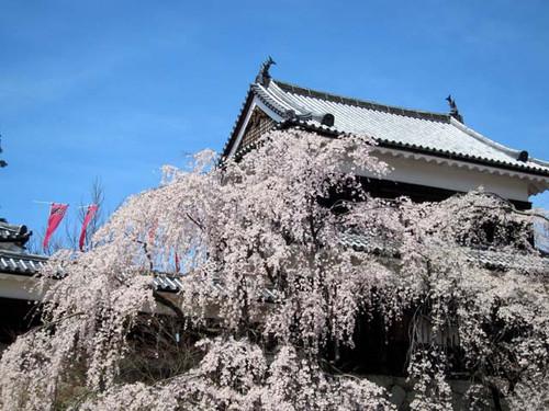 櫓門と枝垂れ桜