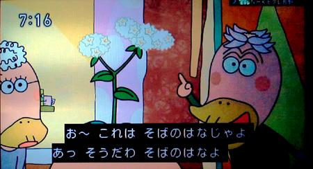 おー、これは蕎麦の花じゃよ