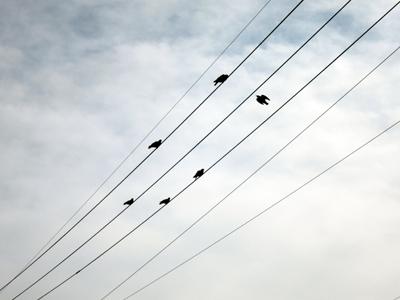電線にとまる鳩たち