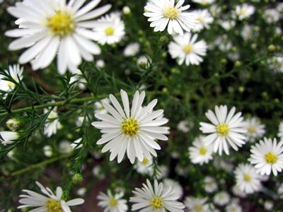 この花なんの花