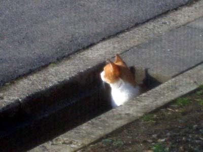 Stalk_cat